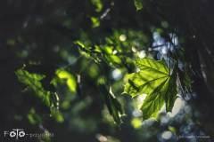 FOTO-Przygoda-w-Świdwinie-Wiosna-19-1516b
