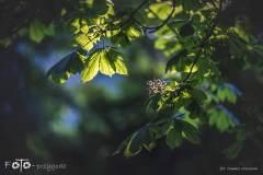 FOTO-Przygoda-w-Połczynie-Zdroju-Wiosna-19-0558b