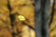 Plener-w-Podlipcach-Reportaż-Listopad-18-106agotowe