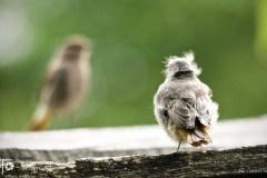 Ptaki-Wiosna-13-066bgotowe