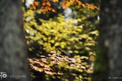 Spacery-Jesień-14-189bgotowe