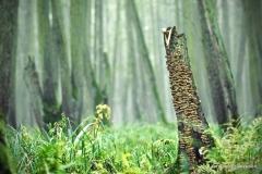 Przyroda - Krajobraz 011