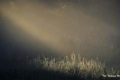 Przyroda - Krajobraz 016