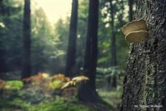 Przyroda - Krajobraz 048