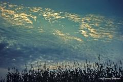 Przyroda - Krajobraz 057