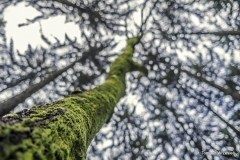 Przyroda - Krajobraz 059