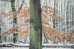 Przyroda - Krajobraz 069