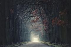 Przyroda - Krajobraz 072