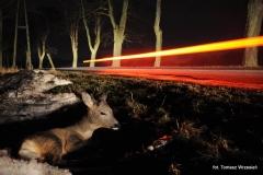 Przyroda - Zwierzęta 017