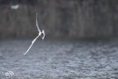 Nad-jeziorem-marzec-2020-008_wm
