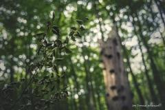 Plener w Ińsku [Wrzesień 18] 184bgotowe