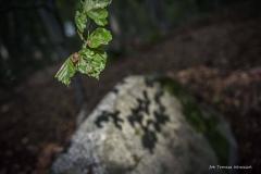Plener w Ińsku [Wrzesień 18] 348bgotowe