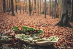Plener w Podlipcach - Beata Pryma [Listopad 18] 116b