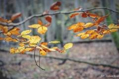 Plener w Podlipcach - Julia Igielska [Listopad 18] 034b