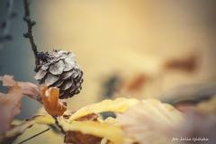 Plener w Podlipcach - Julia Igielska [Listopad 18] 061b