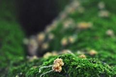 FOTO-Przygoda-w-Świdwinie-Wiosna-19-Ewa-Prygiel-004a