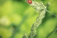 FOTO-Przygoda-w-Świdwinie-Wiosna-19-Marta-Mroczek-007a