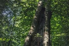 FOTO-Przygoda-w-Połczynie-Zdroju-Wiosna-19-Joanna-Gasek-094a