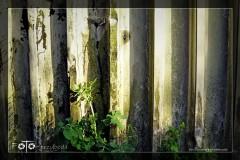 Genowefa-Michalczuk-Kwiecień-18-083_Fotor