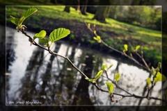 Józef Majewski [Kwiecień 18] 012_Fotorgotowe