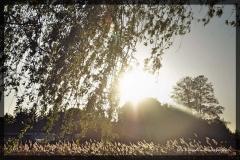 Kisarewska Klaudia [Kwiecień 18] 015_Fotorgotowe