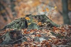 Plener w Podlipcach - Julia Igielska [Listopad 18] 103b