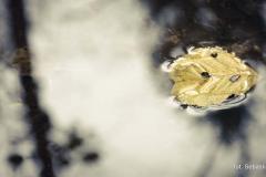 Warsztaty - foto-przygoda - zdjęcia kursantów 009