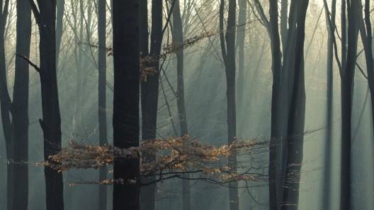 1 miejsce - konkurs Tajemnice lasu organizowany przez WDK Kielce 2018