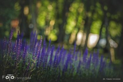 3 - FOTO-Przygoda w Połczynie-Zdroju [Wiosna 19] 0499b