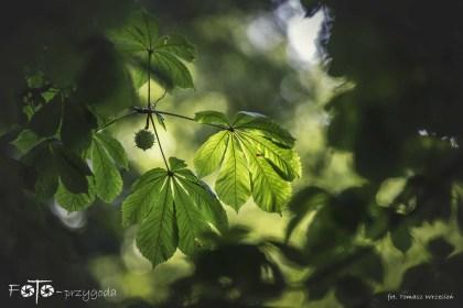 7 - FOTO-Przygoda w Połczynie-Zdroju [Wiosna 19] 2454b