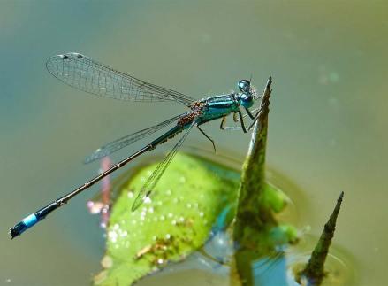 ▶ Fotografieren einer Libelle – exzellente Bilder