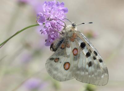 ▶ Schmetterling Fotos: 8 Tipps für exzellente Bilder