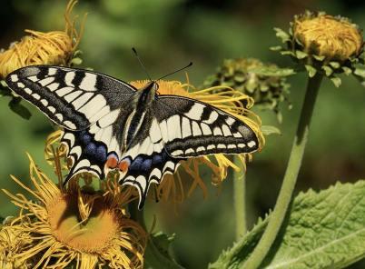 ᐅ Schmetterlinge fotografieren – auffallend gute Bilder