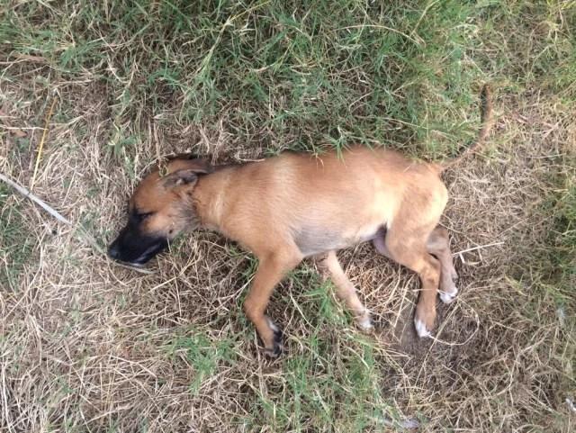 Alanya'da 7 Sokak Köpeğinin Zehirlendiği İddiası