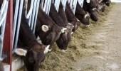 Hayvan Çiftliği Sahibi, Aylık 5 Bin TL'ye Çalışacak Çoban Bulamıyor