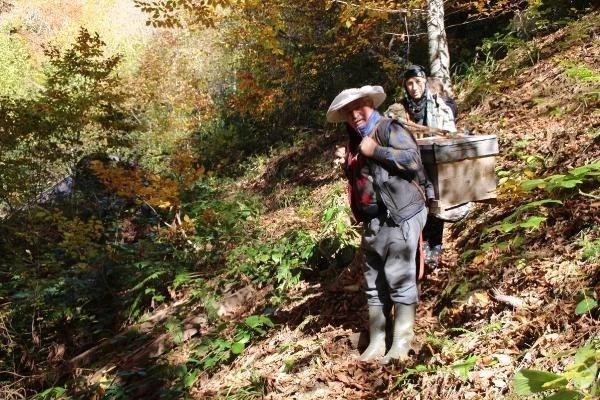 gurgen agacindaki kovanlara teleferikle 3 13779988 o - Gürgen ağacındaki kovanlara teleferikle ulaşıyorlar