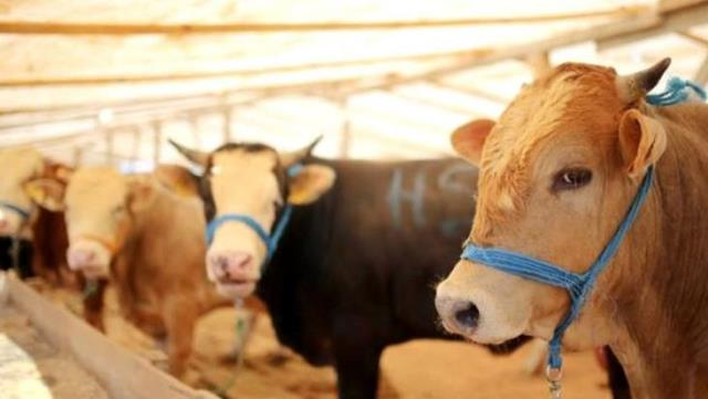 Kurban pazarları hareketlenmeye başladı! Fiyatlarda hayvan başına bin liralık artış var