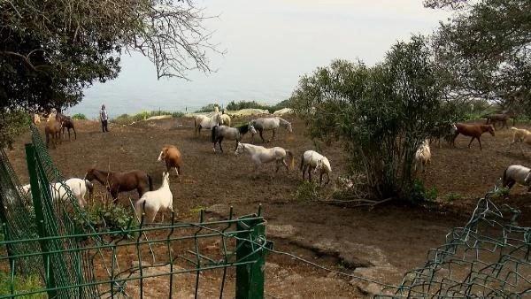 İBB'nin kayıp atlarının faturası Dörtyol Belediyesi Veteriner İşleri Müdürü'ne kesilecek! Memurluktan çıkarılması isteniyor