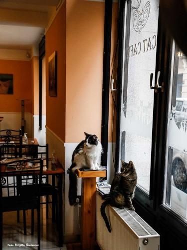 cafe_20140206_cat