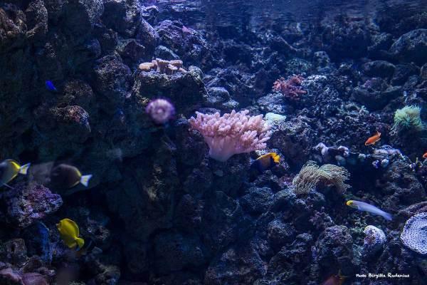 event_20130723_akvarium