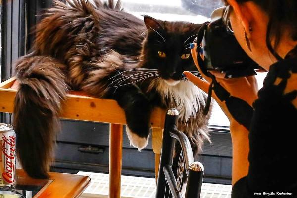 cat_20140315_1