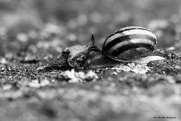 macro_20140809_snail