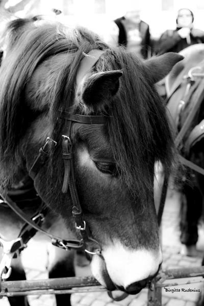 bw_20141130_horse