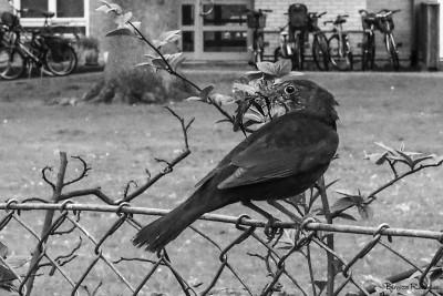 bw_20150505_bird