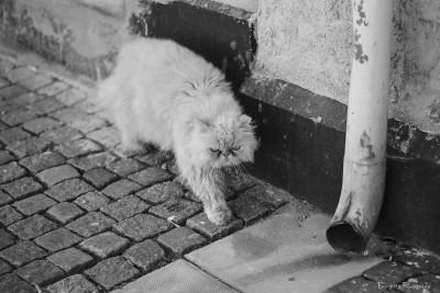 bw_20150612_catwalk