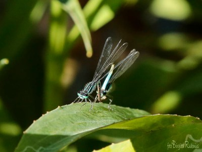 dragonfly_20150702