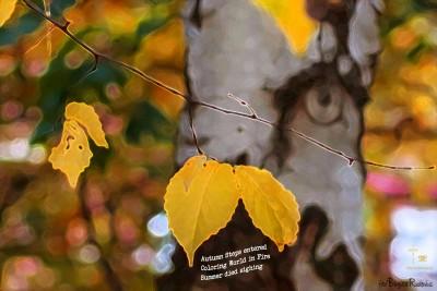 #HAIKU - Autumn