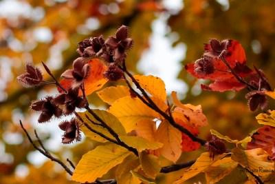 Autumn is happy