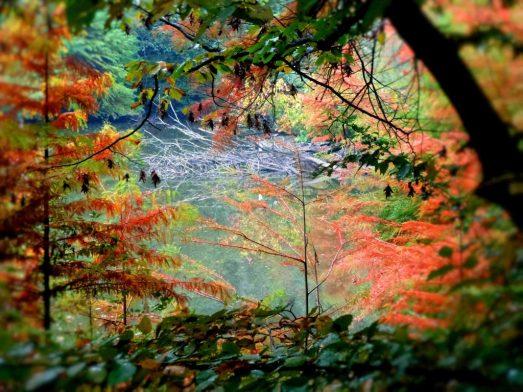 Autumnia-bosco-autunnale-jpeg