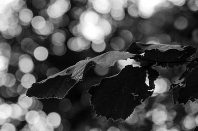 05_Altrhein_Kehl